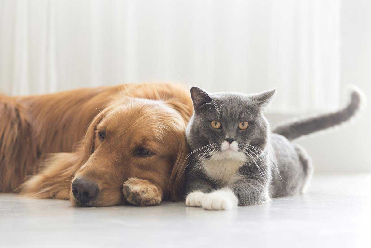 veterinary services in Reynoldsburg, OH
